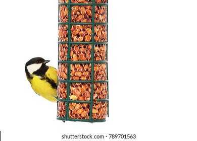 great tit on nut feeder in winter ( Parus major ); bird isolated over white background, with place for your text; feeding birds in winter is more and more popular