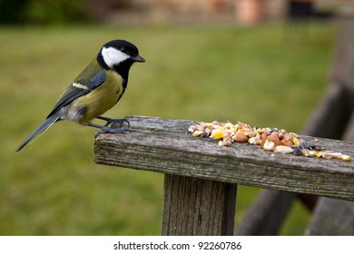 Great tit (Parus major) Standing on a wooden bench eating bird seed.