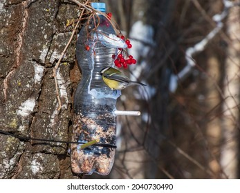 Great tit (Parus major) visiting bird feeder made from reused plastic bottle full with grains and sunflower seeds in a winter day. DIY feeder made from bottle and pencils hanging in the tree