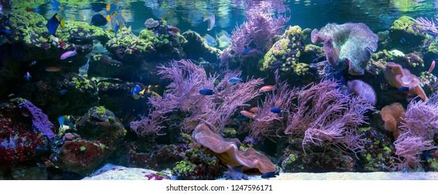 Great underwater world fish in aquarium