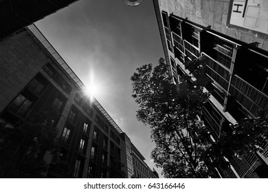 Great urban lifestyle view with facade of old building and sunny sky, tree branch in European city in black and white