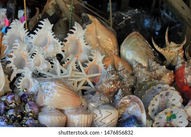 Great variety of sea fauna of Thailand. Bizzare shape and coloring sea shells. Region of Krabi.