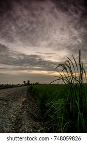 a great view of landscape at paddy field during sunset
