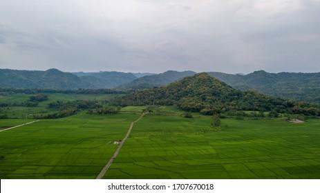 Great view of the large rice paddy fields in Nanggulan, Kulonprogo, Yogyakarta