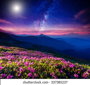 Great view of the magic pink rhododendron flowers on the hill. Dramatic and fantastic scene. Location  Carpathian, Ukraine, Europe. Beauty world. Instagram toning effect.