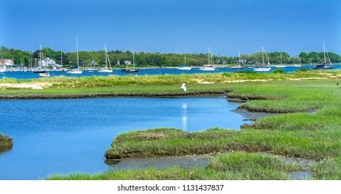 Great White Egret Marsh Padnaram Village Harbor Sailboats Buzzards Bay Dartmouth Masschusetts