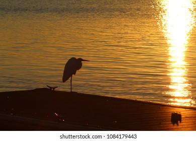 egret great silhouette white images stock photos vectors