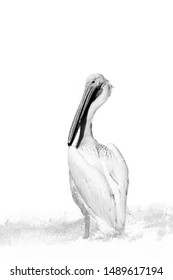The great white pelican (Pelecanus onocrotalus) also known as the eastern white pelican, rosy pelican or white pelican, silhouette with white background.