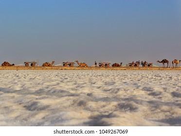 The Great White Rann of Kutch, Gujarat