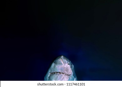 Great White shark jaws while coming on deep blue ocean background