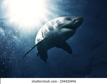 Great White Shark with rays of sun on top left