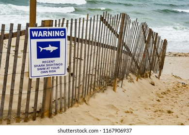 Great White Shark Warning Sign