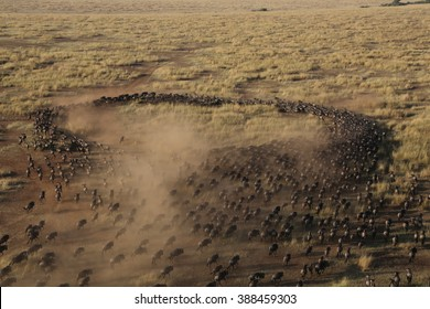 The Great WildeBeest Migration from the Hot Air Balloon