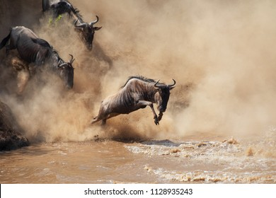 It is the Great Wildebeest Migration.  These are good pictures of wildlife. Photos were taken on short distance and with excellent light.