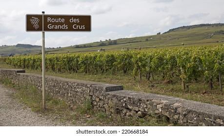 great wine vineyard in bourgogne france