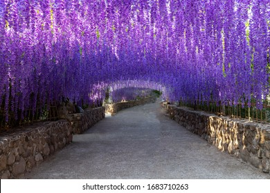 The great wisteria flower background