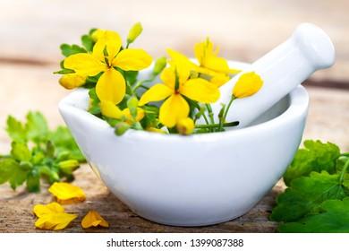 Greater celandine (Chelidonium majus) herbal