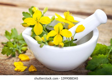 Greater celandine (Chelidonium majus) - herbal plant