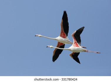 Aninimal Book: Flamingo Flying Images, Stock Photos & Vectors   Shutterstock