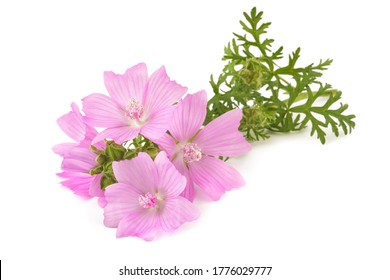 greater musk mallow flowers isolated  on white background - Shutterstock ID 1776029777
