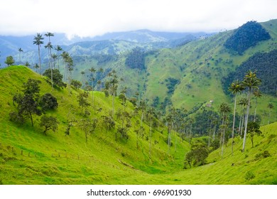Colombia's greatest secret spots: The Carbonera Forest, the world's biggest palm forest!