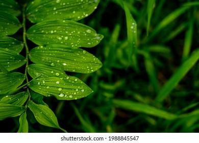 Gree crisp grass with due on them. Closeup. High quality photo