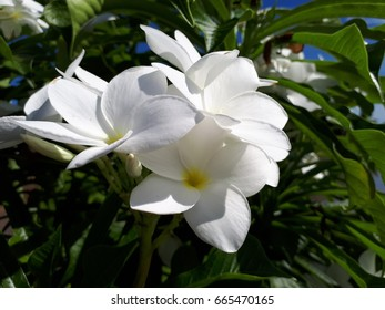 greeb plant
