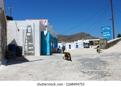 Greece, Mikonos, May 2018 A cat is slowly approaching a fish Tavern at Divounia beach in Mikonos. Lunch time, very clear sunny day with beautiful blue sky.