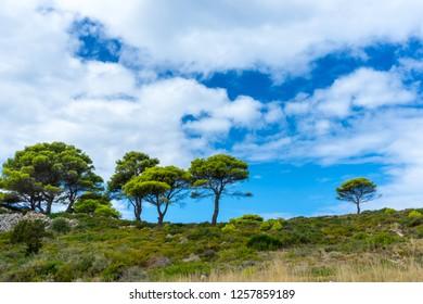 Greece, Zakynthos, Shiny green pine trees in typical greek nature landscape