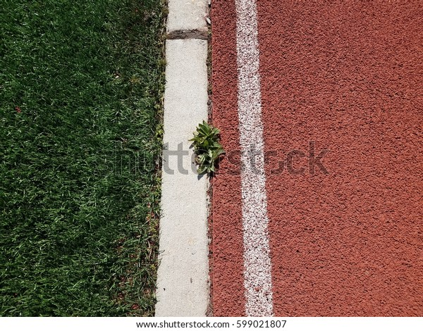 greed weed growing between artificial grass and a running track