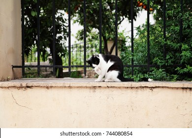 Greek cat washes. Athens.Streets of Greece.
