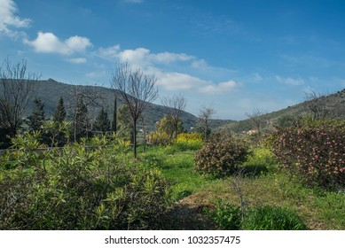 Greek forest outdoor scenery