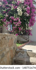 Greek house pink white summer flower