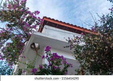 in greek island ikaria, in a house, they made a hole for the paperflower (bougainvillaea). This tree a kind of botanic symbol of this area
