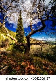 Greek mainland nature