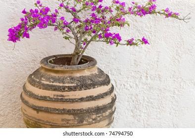 in Greek pots