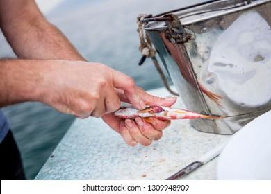 Greek restaurant keeper preparing fish for dinner outdoors on the greek peninsula Pilion