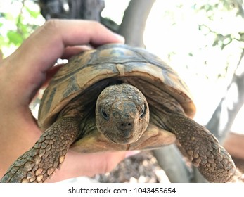 Greek turtle held in hand