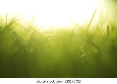 Green abstract background, grass in sunset with glow.