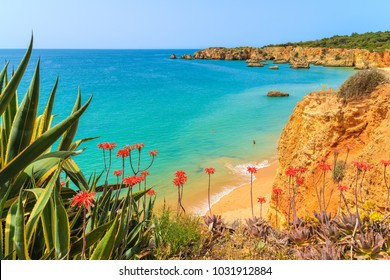 Green agave plants on cliff and view of sea with beach, Algarve, Portugal