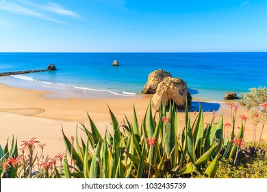 Green agave plants on cliff and view of sea with beach in Portimao town, Algarve, Portugal