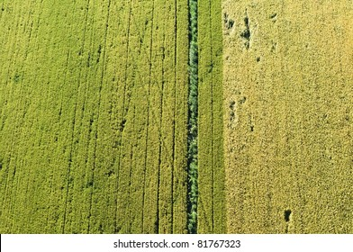 green agricultural fields of the bird's eye view