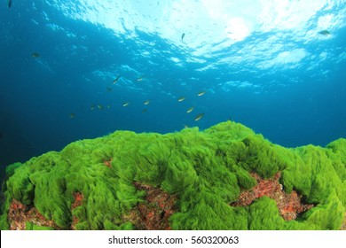 Green Algae Blue Sea Water