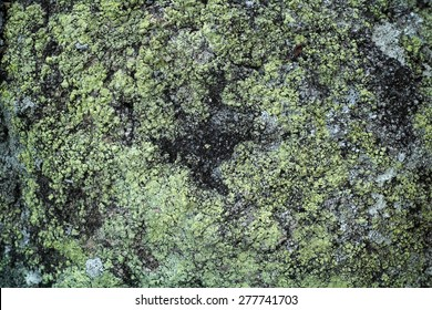 Green algae grows on rock with rough texture. It also creates a colorful pattern.