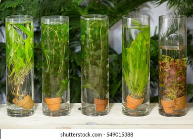 Green algae planted in long glass tubes decorated on table in backyard garden.