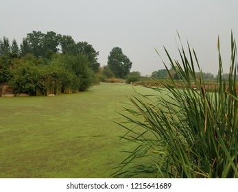green algae plants covering stagnant water in a lake with plants
