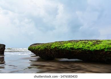 Green algae rock on beach