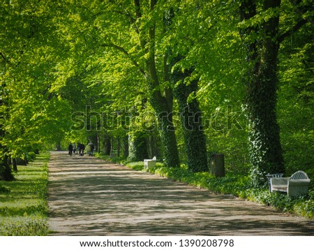 A green alley in the park with people walking in the distance
