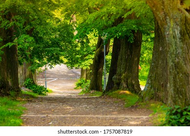 Green alley of tree, hiking patch in spring nature