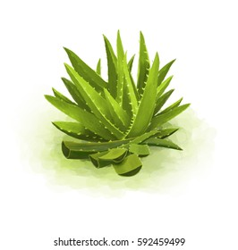 Green aloe in a clean, white background